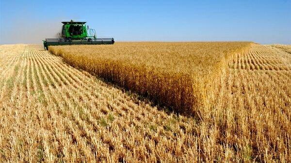 Москва смягчила экспортную пошлину на пшеницу
