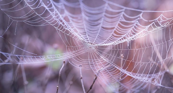 Ученые разработали синтетический аналог паутины