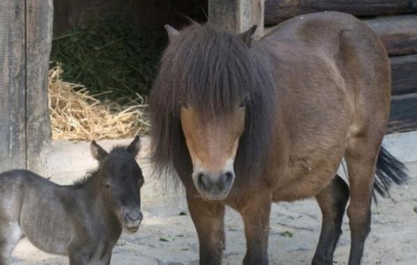 Гражданин Сирии изнасиловал пони в берлинском зоопарке