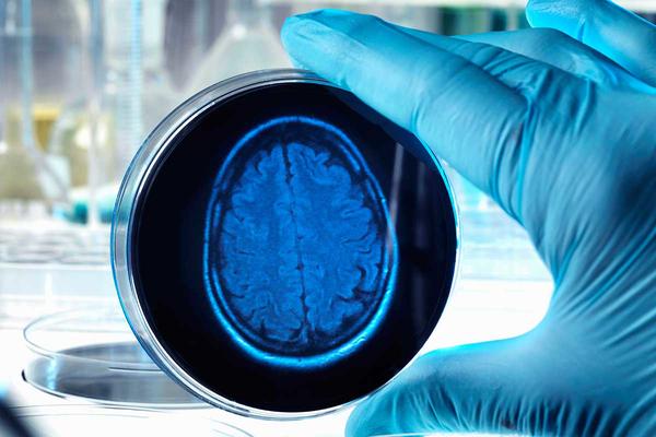 Медикам удалось продержать больше суток живым и функционирующим головной мозг без тела
