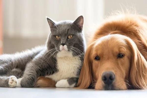 В США запретили есть домашних животных