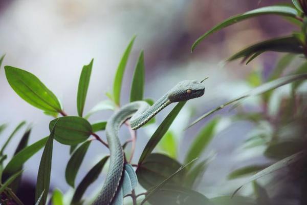 В Китае насильник умер от укуса своих же змей