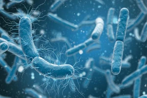 В океане нашли бактерии, которые питаются мышьяком