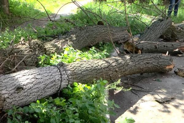 В Краснодаре  девочка погибла от падения дерева