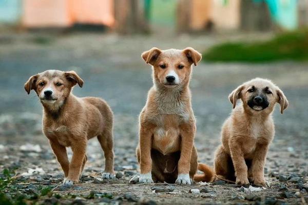 Бездомных животных запретили умерщвлять