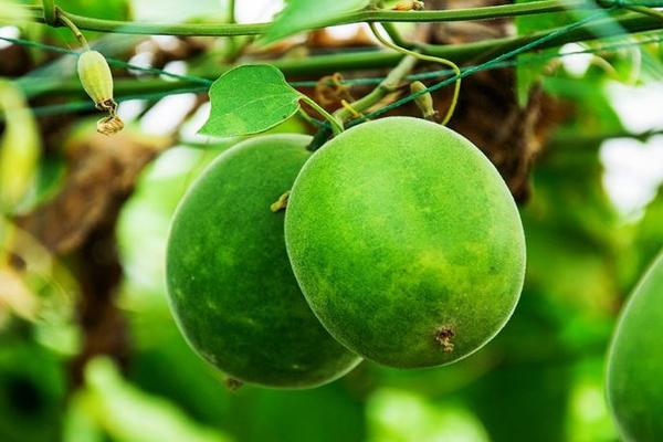 Медиками найден омолаживающий фрукт