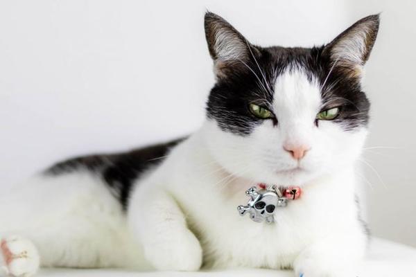 От следователей сбежал кот-наркокурьер
