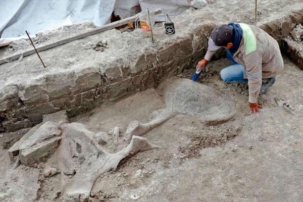 Археологи обнаружили большое захоронение мамонтов