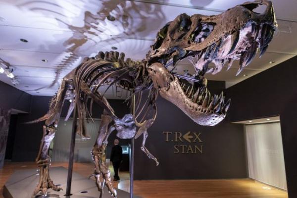 На аукционе продали скелет тиранозавтра за круглую сумму