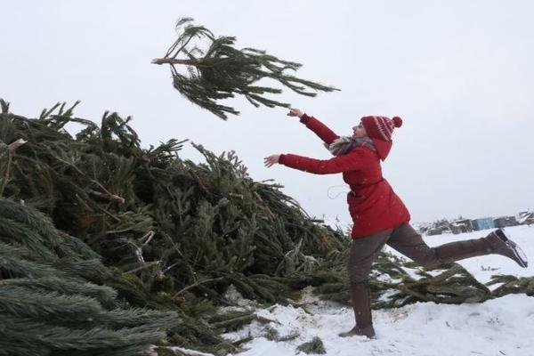 В Казани открылись пункты приема новогодних елок