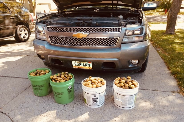 Американец нашел 70 кг орехов под капотом машины